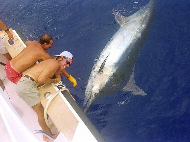 Marlin Fishing in Florida