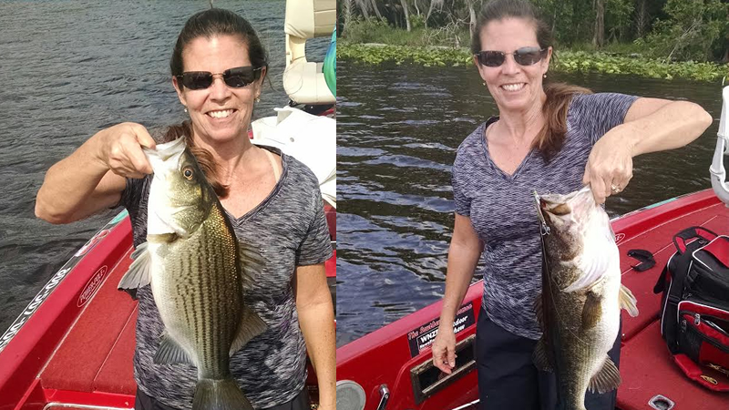 Steel Shad Lure Florida Bass Fishing
