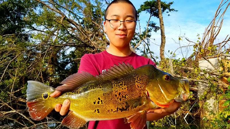 Outstanding blue lagoon fishing for bass in miami florida for Blue bass fish