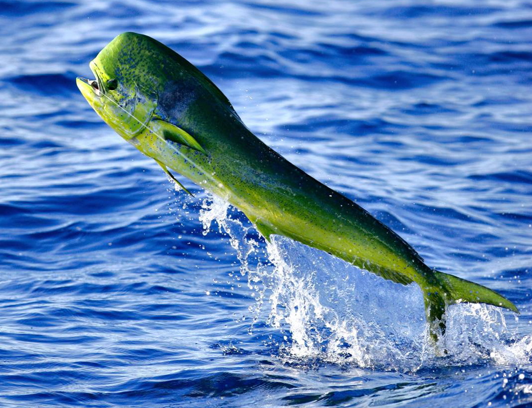 Jacksonville Sport Fishing Charters