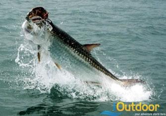 Marathon Tarpon Fishing