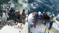 Miami Pelagic Fishing Charter