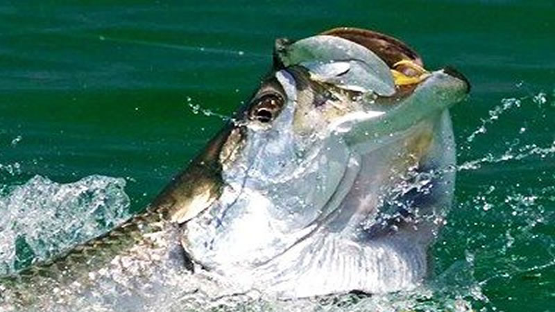 Tarpon Springs Inshore Fishing