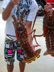 HUGE LOBSTERS | Outdoor Adventures for Fishing, Sport fishing, Boat Charters | iOutdoor