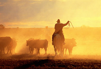 A Real Florida Cattle Drive Outdoor Adventures For