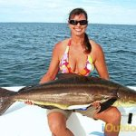 Cobia Fishing in Destin Florida