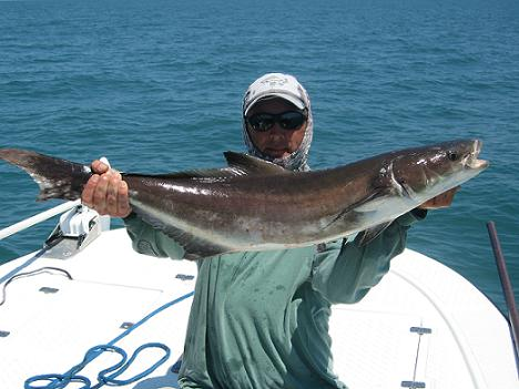 Cobia fishing in destin florida photo gallery for Fishing in destin fl