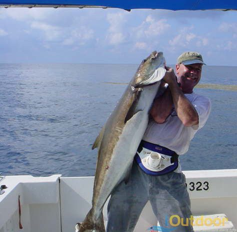 Stareaters powerful predatory fish midwater zone for Deep sea fishing jacksonville