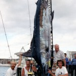 Top 5 largest Marlin caught in the Atlantic