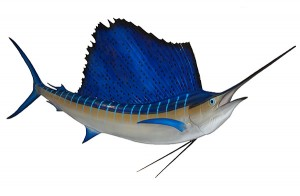 Sailfish - Know Your Fish